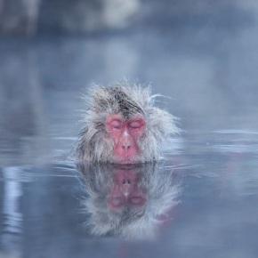 Japon - Les singes de Nagano