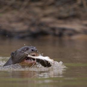Les eaux fantastiques du Pantanal